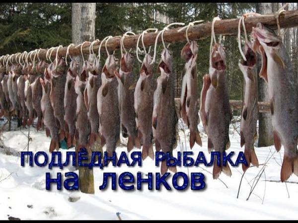 Подлёдная рыбалка на ленков. Улов по-русски .Рыбацкая песня.