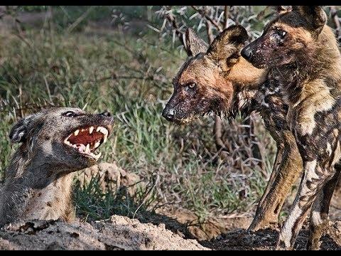 Необычная жизнь животных. Жизнь на воле.
