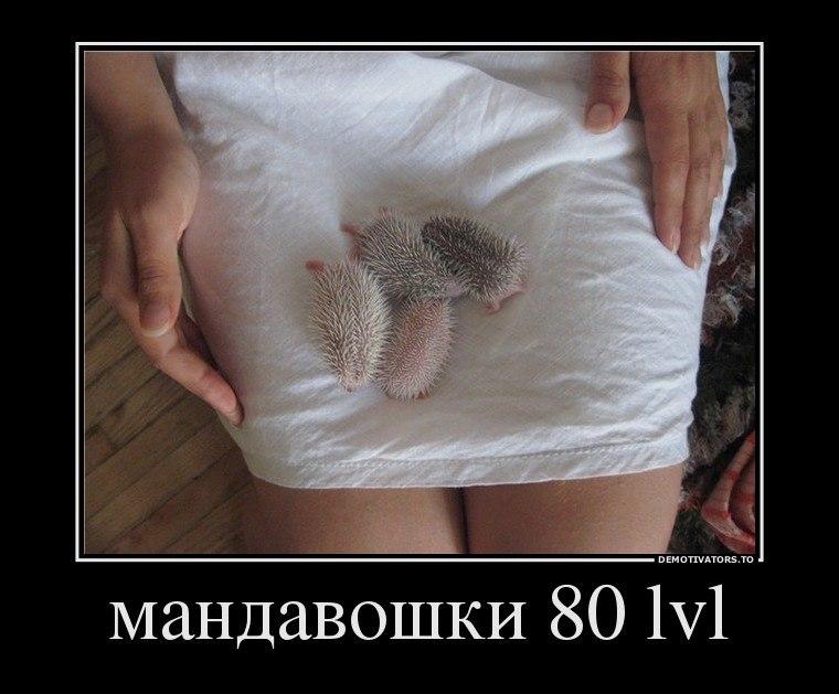 Скачать фоторедактор на русском языке бесплатнодляпланшета голод правит