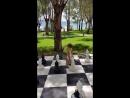 Александр-шахматист!