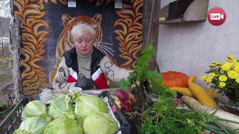 Блог садовода и огородника Светланы Кацаповой 100 вып (подзимний сев и хранение овощей)