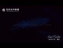 Биолюминесцентные морские существа. Светлячок кальмар