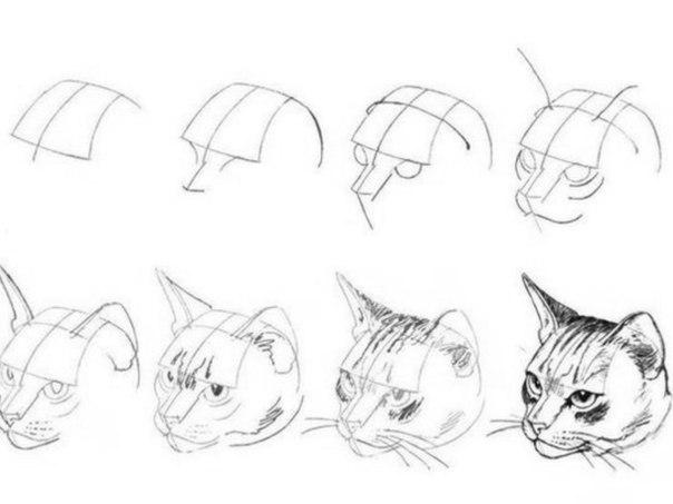 Как рисовать животных и