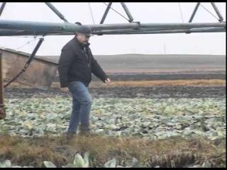 Проблема с уборкой овощей в Костанайской области