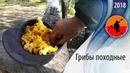 Грибы походные Как я собирал и готовил грибы в Карелии Приключения на байдарке