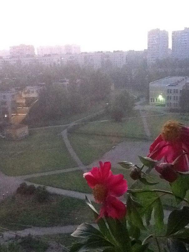 Миша Андриевский | Санкт-Петербург