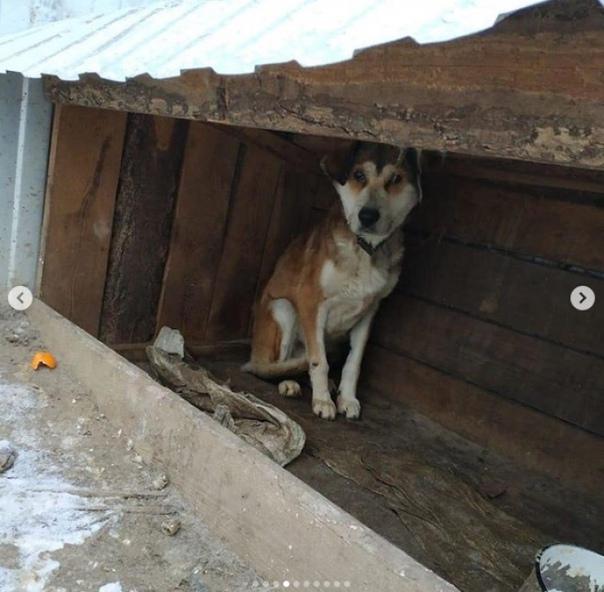 В приюте Благовещенска десятки собак погибли от голода Полиция проводит проверку по факту гибели