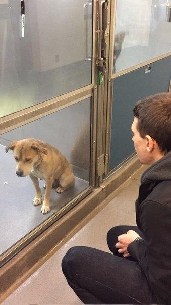"""""""Взяли пса из приюта, смешные видео и фото до слёз. Смешные"""