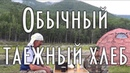 Обычный таежный хлеб / Тайга моя заветная / 30.07.2018