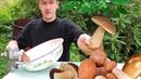 Сажаю Белые Грибы на Даче Как Посадить и Вырастить Грибы на Огородном Участке
