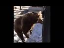 Медведица Машка радуется солнышку