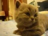 Котик резко вырубился tired cat funny