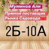 Али Муминов