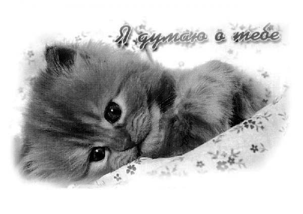 Картинки с надписью скучаю котик