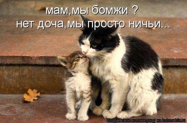 Дмитровский Форум V2 * Просмотр темы - Про кота