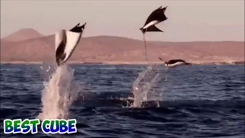 Лучшее видео CUBE за май 2017 Бест Куб за неделю - Выпуск 166