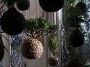 Зеленые крыши.  Садовые дорожки (Живые дорожки).  Вертикальные сады.  Клумба - источник цвета и радости.