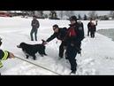 США собаку спасли из замерзшего пруда