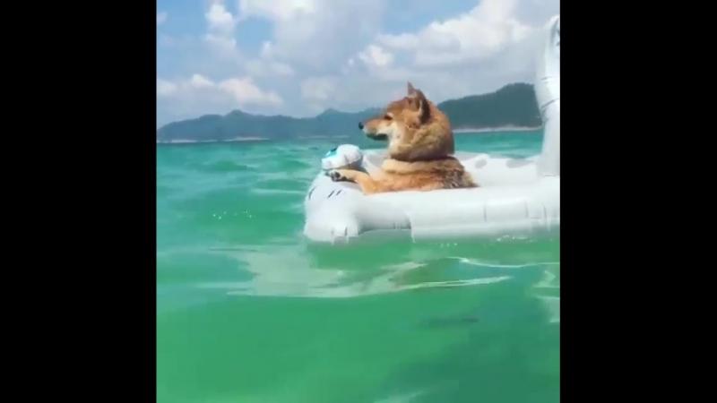 АХ, ЛЕТО...Солнце, море, чайки, пляж...