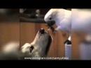 Давай кушай Главное про кота помни уговор