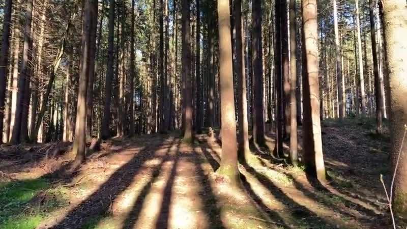 So verschwindet DEIN Wald - WICHTIG!