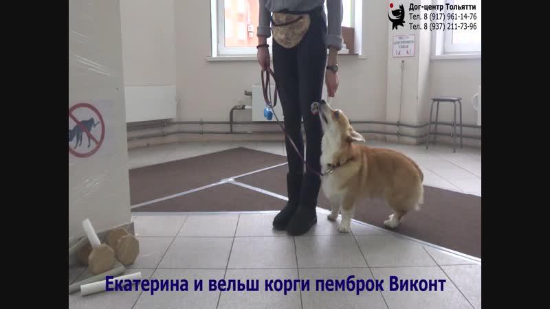 Екатерина и вельш корги пемброк Виконт Занятие по дрессировке ОКД обучение собаки движению рядом Тольятти 16 декабря 2018