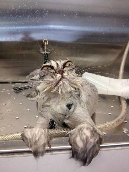 Мокрые киски.