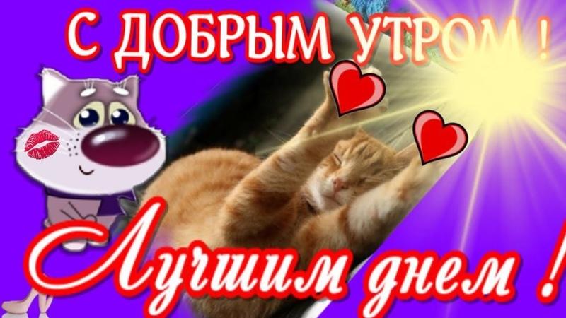 Добрым утром ! Пожелание в доброе утро ! Давай просыпайся, хороший и добрый день на дворе !.