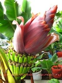 Фото всех экзотических комнатных цветов