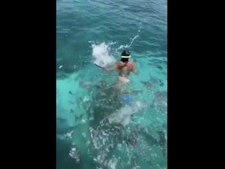 Где же рыбка