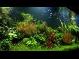 #FAAO #Aquascaping #plantedaquarium Update | Aquaflora's 1400L Nature Aquarium | Interzoo showtank