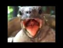 Очень громка черепахе орут ААААААААААААААААААААААААА