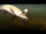 Рыбалка: щука на силикон и мертвую рыбу.