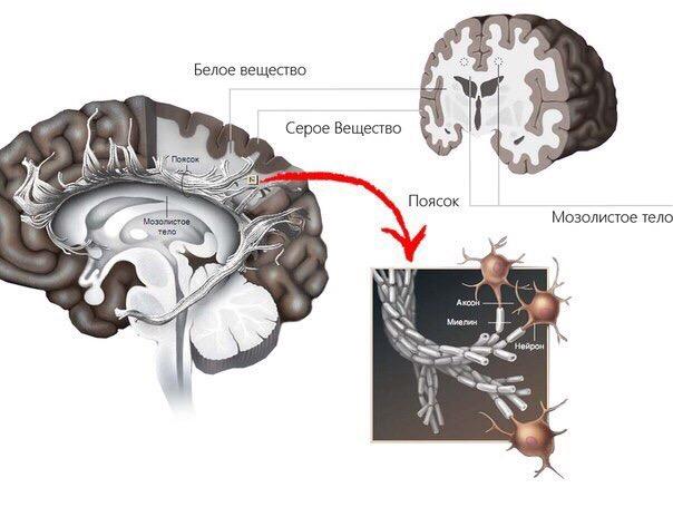 Как натренировать ваш мозг для лучшей производительности Мы все слышали выражение «первый блин комом» от наших учителей и родственников. Вырастая, мы слышали выражение о блине уже из уст