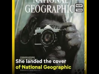 NowThis - Beloved gorilla Koko, famous for learning...
