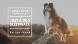 Sammy Visits Asheville - Just a DOG Sleepwalk --zhiyun Crane