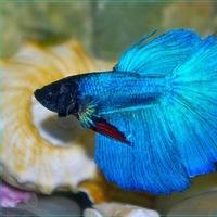 a15a22b6b8e8b5 акваріумні рибки   ВКонтакте