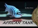 African Cichlid Aquarium - 135 Gallon Rock Reef Mbuna Tank Setup
