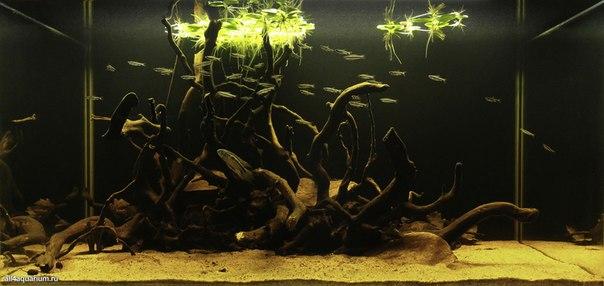 Конкурс дизайна биотопных аквариумов JBL 2014 Yy_uqQywyZA