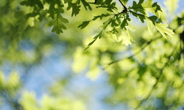 Летнее небо в зелёную пятнышку. Именно так можно назвать время, когда домовики уже готовят обед, а ты ещё и не думал сползать с кровати. В зелёную, от листьев, пятнышку. А ты смотришь снизу