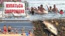 Купаться запрещено жители Волгограда спасаются от жары на диких пляжах
