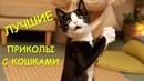 приколы с котиками , котики приколы 2018 , смех до слёз приколы с кошками