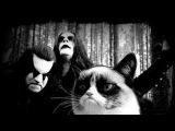 Black Metal Cats (блек метал коты)