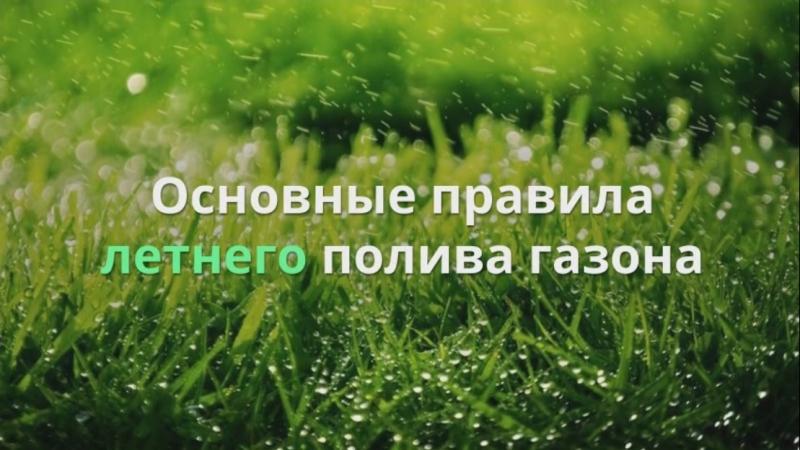 Основные правила летнего полива газона