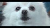 Пёс Гейб (Лентяево)Gabe the dog (LayziTown)