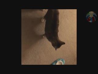 котика в ленту #lm