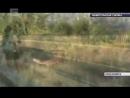 Лисы устроили охоту на уток в Татышев-парке