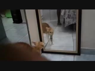 Жизнь котика к такому не готовила