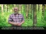 Как ориентироваться в лесу. Не сидится на месте Часть 2