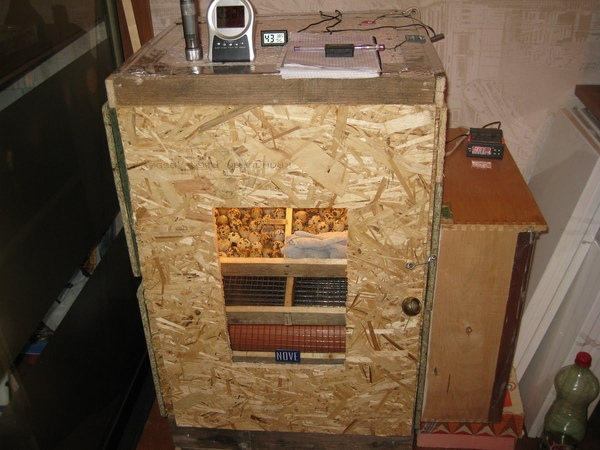 двухкамерный инкубатор для яиц своими руками. double chamber incubator for eggs with their hands